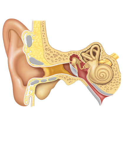 Dentro do ouvido